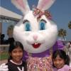 eeh_kv_bunny