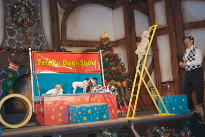 Winter Wonderland - Tricky Dogs Show